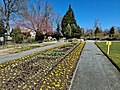 COVID-19-Flair im Botan. Garten Hof B20200406 01.jpg