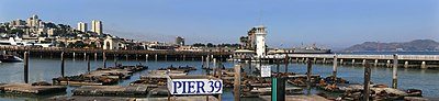California Sea Lions at Pier 39 August 7 2009.jpg