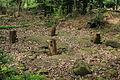 Camp celtique de la Bure - tétrastyle 1.jpg