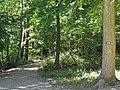 Carrefour de la Route des Princes et du Chemin des Bruyères de Montubois (Forêt de Montmorency) - panoramio.jpg