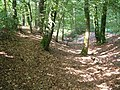 Castle Dyke, hill fort earthworks on Haldon Ridge - geograph.org.uk - 1749488.jpg