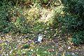 Cat @ Square Carlo Sarrabezolles @ Paris (30187406074).jpg