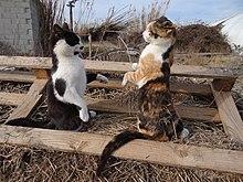 Glaring Cat Gif