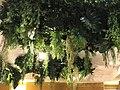 Ceiling garden 2.jpg