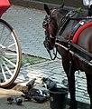 Central Park Horse Carriage (6279252801).jpg