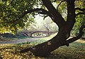 Central Park New York City New York 23.jpg