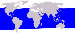 .::Calderón Tropical o de Aleta Corta 250px-Cetacea_range_map_Short-finned_Pilot_Whale