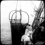 Chalut à bord de la Princesse Alice, marins pêcheurs, explorations du Prince de Monaco, 1905 (5640056111).jpg