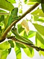 Chameleon, Madagascar (27046569894).jpg