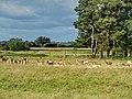 Charlecote Park Deer Sunctuary - panoramio (3).jpg
