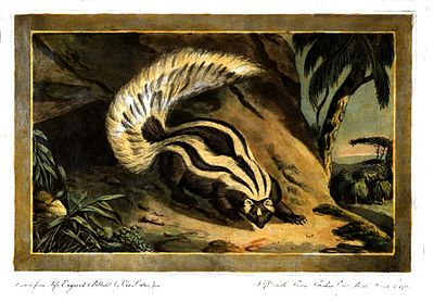 Charles Catton, Animals (1788) Page52 Image1.jpg