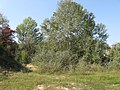 Cherkas'kyi district, Cherkas'ka oblast, Ukraine - panoramio (226).jpg