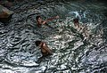 Children play and bathe in the Nile River in Upper Egypt.jpg