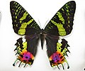 Сравнение бабочек и моли - Comparison of butterflies and moths