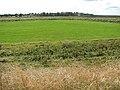 Churchfarm Marshes - geograph.org.uk - 1484295.jpg