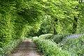 Churchstanton, Downlands Lane - geograph.org.uk - 173640.jpg