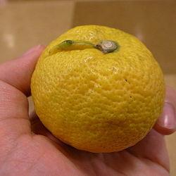 Citrus jabara by OpenCage.jpg