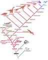 Cladogram Amniota A.jpg