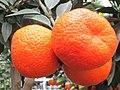 Clementinenbaum - panoramio.jpg