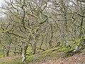 Coed Clawdd-coch - geograph.org.uk - 975741.jpg