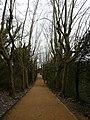 Collserola - Passeig dels Plàtans P1170623.jpg