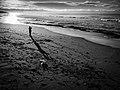 Como é bonito o Mar.... (16270652171).jpg
