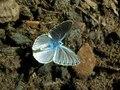 File:ComputerHotline - Argus-bleu (by).ogv