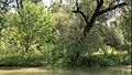 Copac la marginea Lacului Beleu.jpg