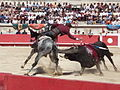 Corrida with horse.jpg