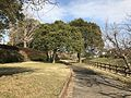 Cosmos Park near Jinyagawa River.jpg