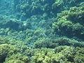 Costa Cabo de Gata 11.JPG