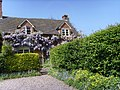 Cottage covered with wisteria - geograph.org.uk - 424787.jpg
