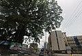 Cotton tree in Freetown, SL - Mapillary (yIBZ74r6IsUFOaWtAPwhWw).jpg