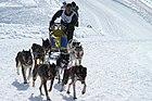 Course de chiens de traîneau Retordica en février.jpg