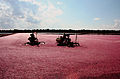 Cranberry field Whitesbog Village.jpg