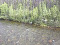 Crescent Creek Water Quality Testing, Yukon-Charley Rivers, 2003 2 (d3169e76-818e-4111-9bda-d1773a6ea52d).jpg