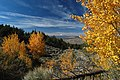 Crooked River National Grassland Fall color aspen (36456346681).jpg