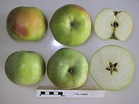 Cross section of Fall Harvey, National Fruit Collection (acc. 1950-191).jpg