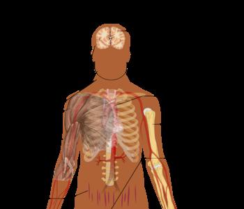 malattia di Cushing e minzione frequente