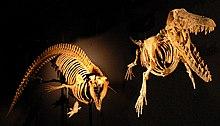 Cynthiacetus and Ambulocetus.jpg