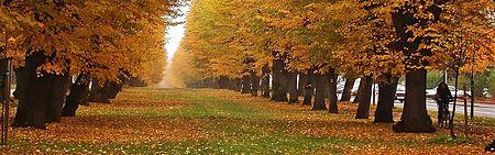 https://upload.wikimedia.org/wikipedia/commons/thumb/d/dd/Czechia%2C_Jicin%2C_Wallenstein%27s_alley_crop.jpg/450px-Czechia%2C_Jicin%2C_Wallenstein%27s_alley_crop.jpg