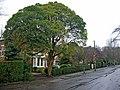 Davenport Avenue, Hessle - geograph.org.uk - 339882.jpg