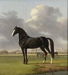 Anthony Oberman: Adriaan van der Hoop's Trotter 'De Vlugge' (The Fast One) in a Meadow
