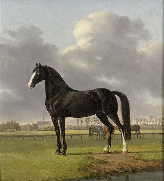 File:De harddraver De Vlugge van Adriaan van der Hoop in de wei Rijksmuseum SK-C-197.jpeg