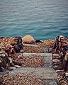 Dead sea wonders.jpg