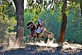 Decorated horse under trees 2H6A9136.jpg