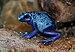 Dendrobates azureus qtl1.jpg