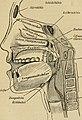 Des Kindes Sprache und Sprachfehler (1894) (14793507733).jpg