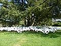 Des fleurs blanches... - panoramio.jpg