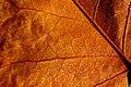 Dewdrops - Flickr - Stiller Beobachter.jpg